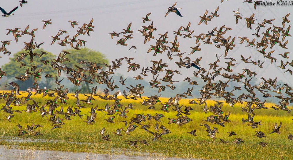 Birds in Okhla - Image Courtesy Rajeev Khanna
