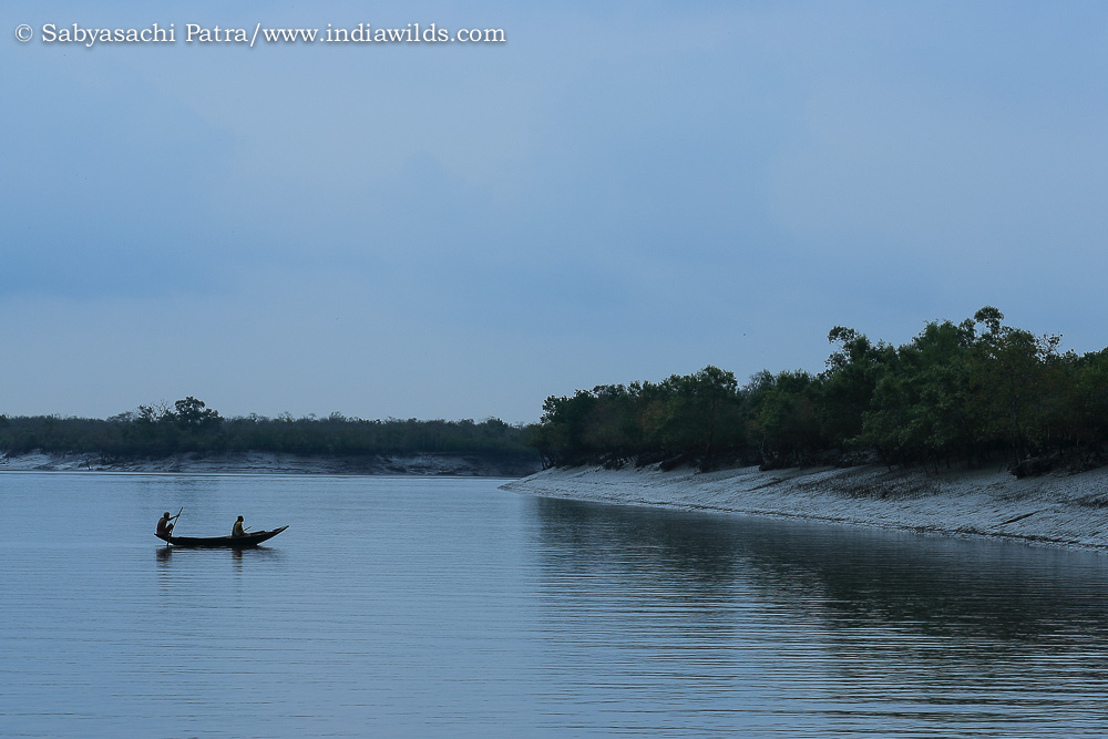 Sundarban landscape
