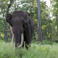 Wild India: Elephant Attacks &#8211; I One of the most frightening experiences in the wild india is due to elephant encounters. In the first part of this Wild India: Elephant Attacks series, I will just...