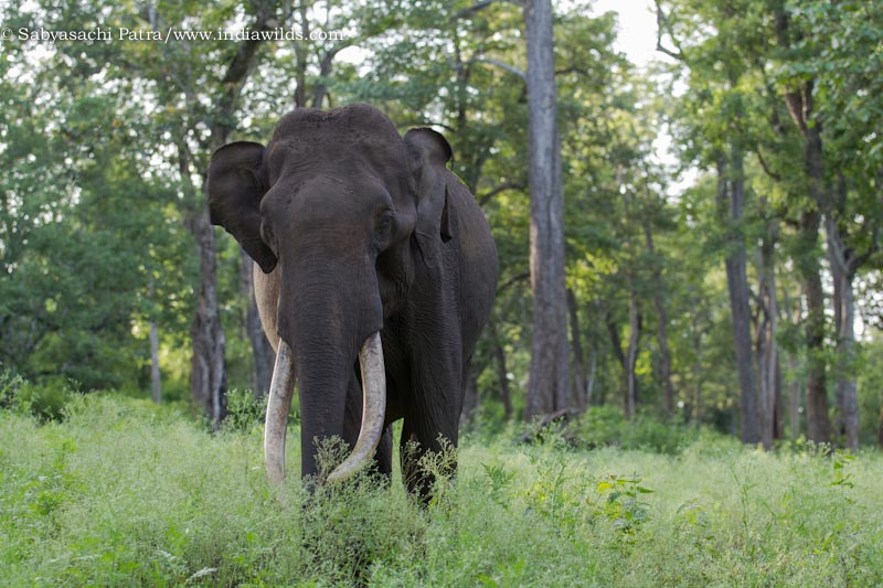 Wild India: Elephant Attacks
