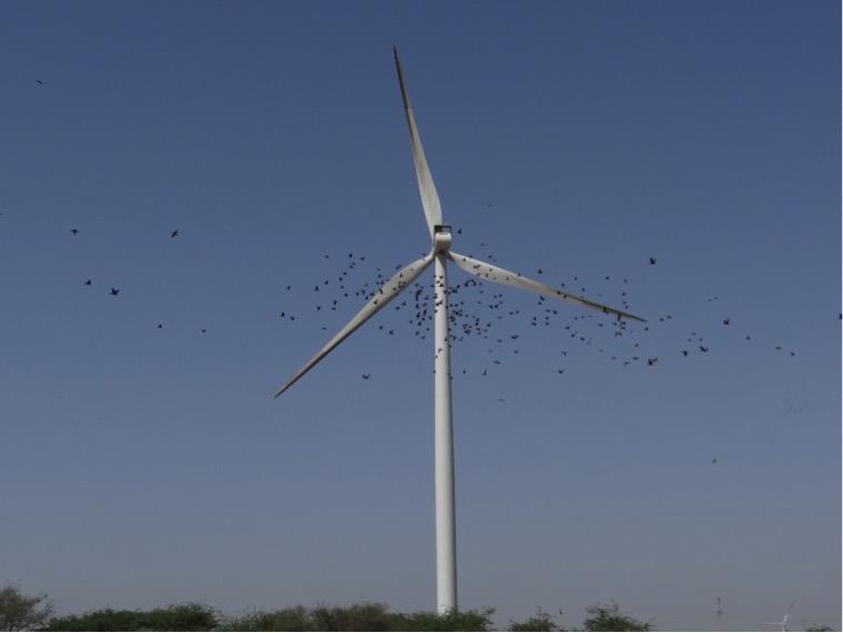 Bird deaths in Windmill