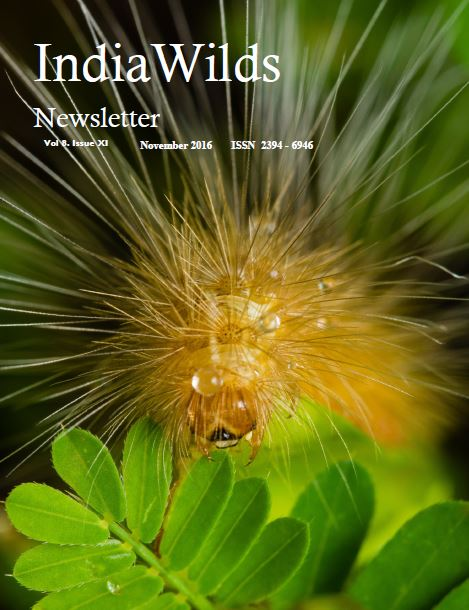 IndiaWilds Newsletter PDF Cover Nov 16