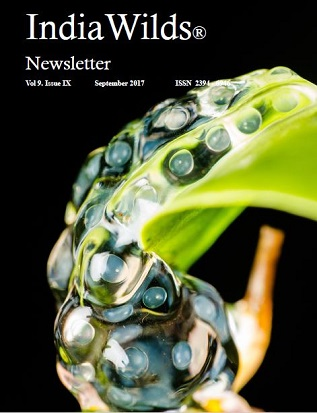 Indiawilds Newsletter Cover Page -September 2017