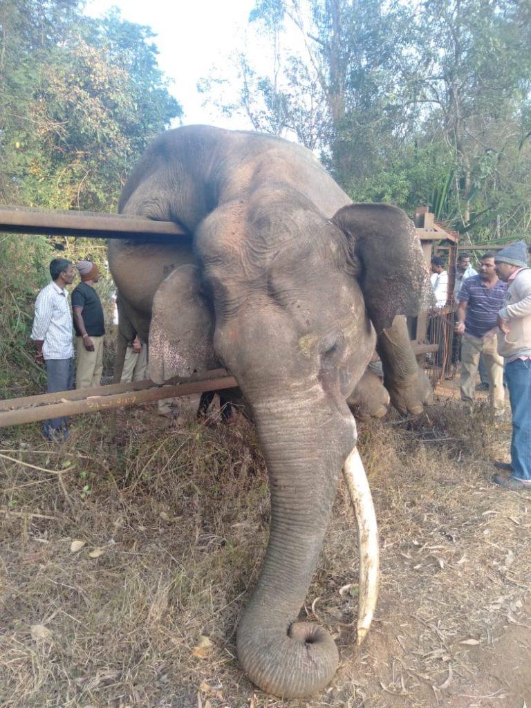 Elephant on fence
