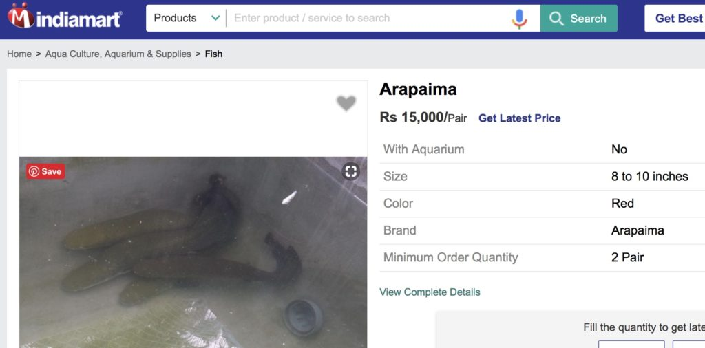 Exotic Arapaima fish on sale onlineExotic Arapaima fish on sale online