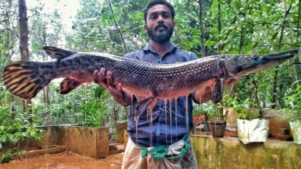 Fisherman with aligator gar photo- Smrithy Raj