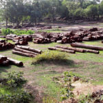 Forests cut down