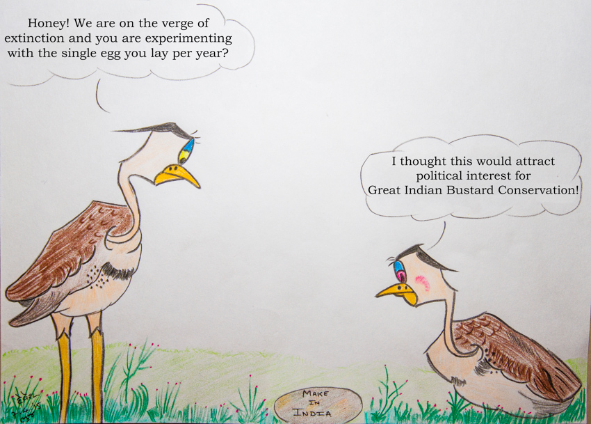 Great Indian Bustards mostly lay only one egg in a year. Image courtesy: Devesh Gadhvi