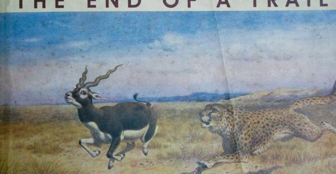 "The End of A Trail: The Cheetah in India By Divyabhanusinh As the title of the book ""The End of A Trail: The Cheetah in India"" suggests, one gets to know the complete history of […]"
