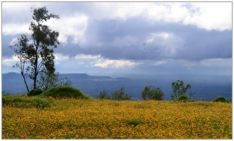 Flowers in bloom on Kaas Plateau