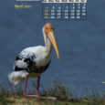 Monthly Mobile Wallpaper Calendar 2021 The IndiaWilds 2020 mobile wallpaper calendars containing various tiger images had become very popular. In 2021 we have decided to showcase other beautiful and charismatic wildlife in our  mobile wallpaper […]