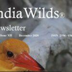 IndiaWilds Newsletter-Dec 2020