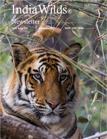 IndiaWilds Newsletter-December-2017