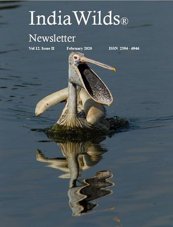 IndiaWilds Newsletter PDF - February 2020