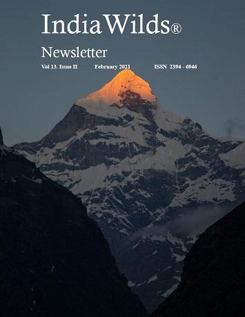 IndiaWilds Newsletter PDF-February-2021