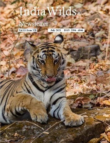 IndiaWilds Newsletter PDF-July-2021