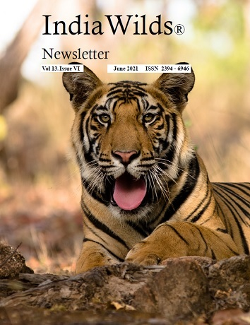 IndiaWilds Newsletter PDF-June-2021