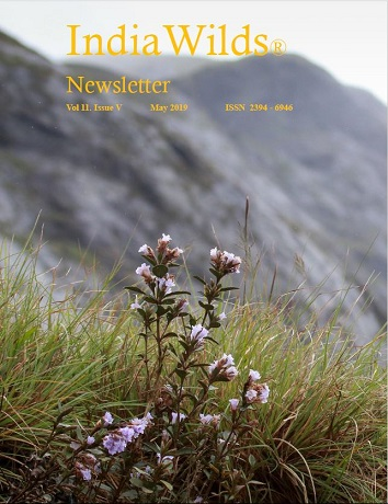 IndiaWilds Newsletter PDF-May-2019