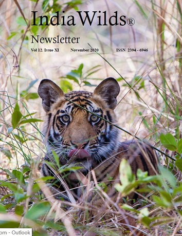 IndiaWilds Newsletter PDF-November-2020