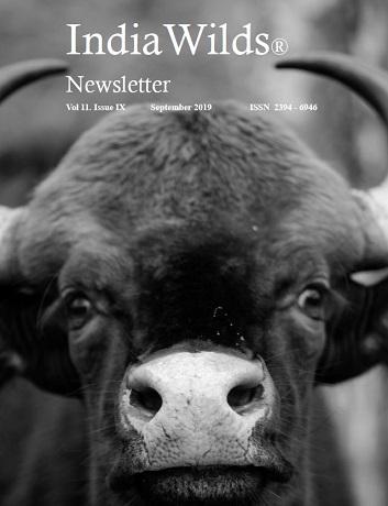 IndiaWilds Newsletter PDF-September-2019