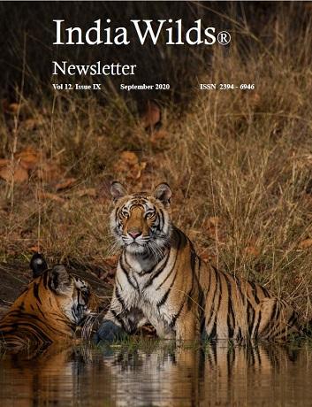 IndiaWilds Newsletter PDF-September-2020