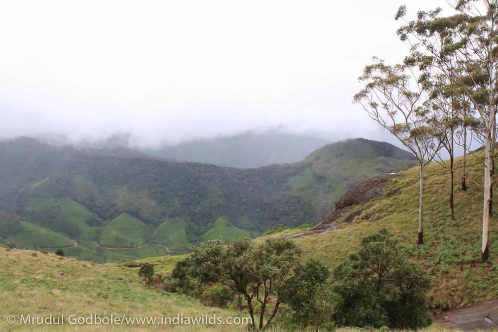 Shola grasslands - Western Ghats