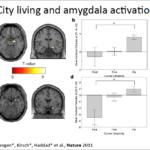 City Living and Amygdala activities