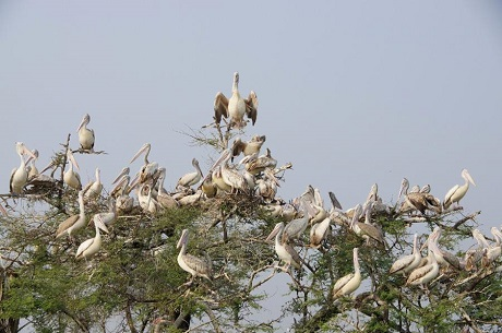 Birds at Kolleru Wildlife Sanctuary