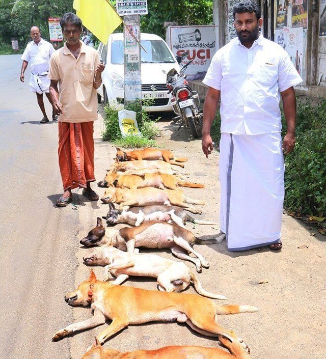 Politician posing with dead street dogs in Kerala