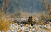Funds released for Project Tiger in last three years An amount of Rs. 370 crores, Rs. 345 crores and Rs. 350 crores was allocated during the financial years 2016-17, 2017-18 and 2018-19 respectively, while an […]