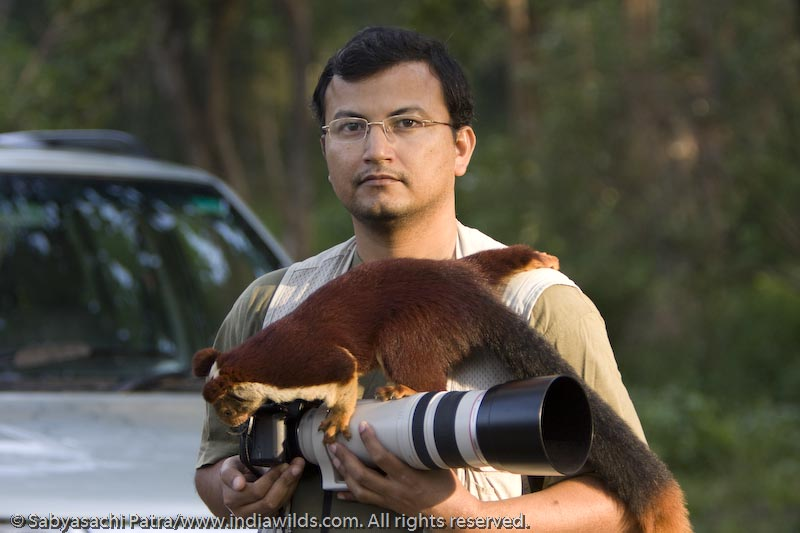 Malabar Giant Squirrel on my shoulder