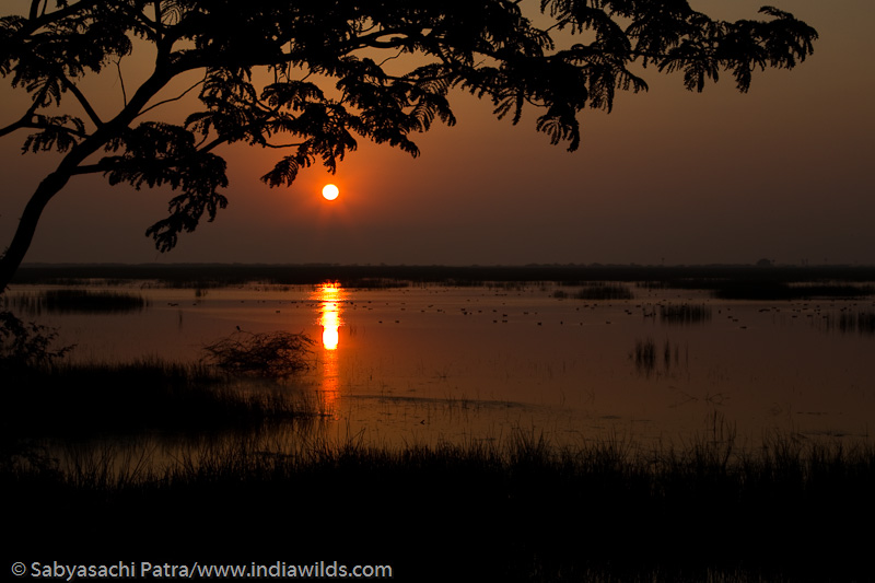 Sunrise in Pulicat