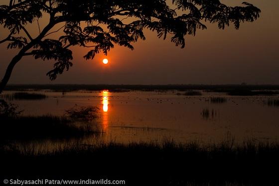 Pulicat Wetland