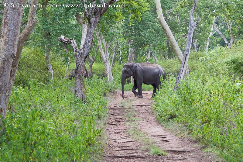 This Photo Taken On October 14 2018 Shows Two Elephants Roaming Around At