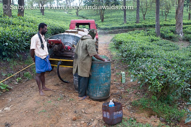 Mixing pesticides to spray on the plantation