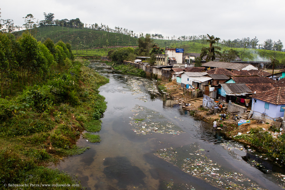 Pesticide runoff from the fields and garbage pollute the fresh water streams