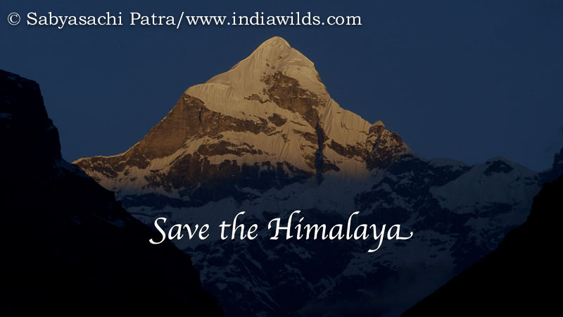 Climate change impacts the ice cover in our himalayan peaks