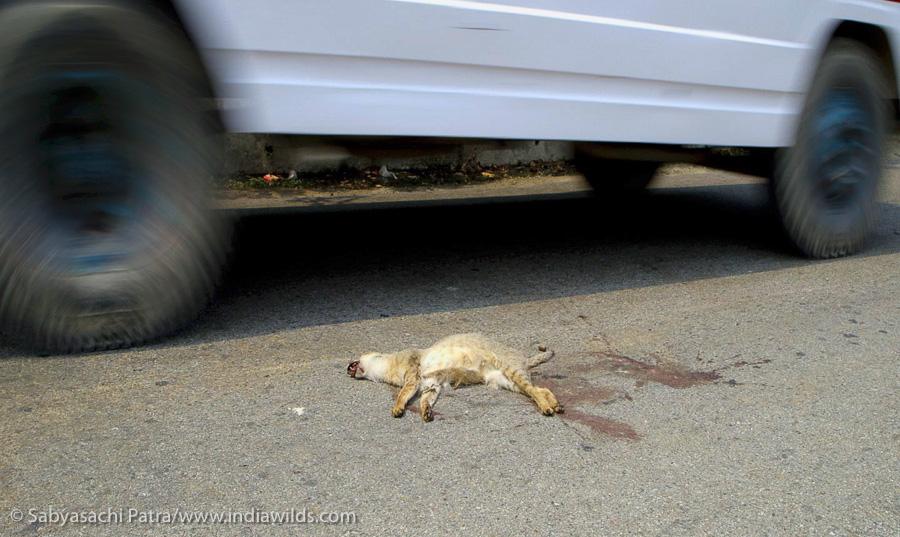 Uttarakhand roadkill