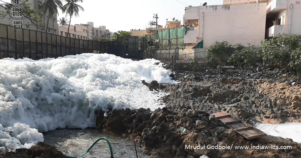 Foaming water in Bellandur lake