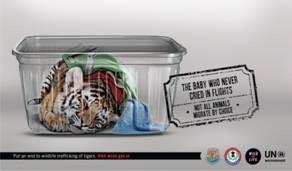 Illegal trading - Tiger