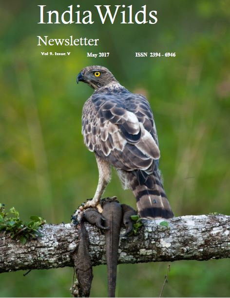 Newsletter PDF - May 2017