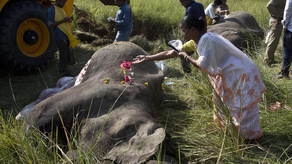 A woman lays flowers on the dead elephant
