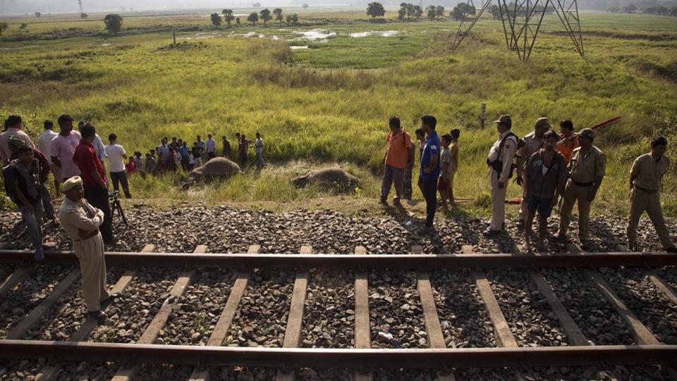Two elephants killed by train in Assam