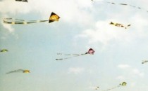 Kite Flying: Impact on birds I was taking my morning walk in the park when I saw a group of people excitedly crowding around. When I came closer I could see that there was a […]
