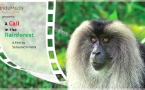 Wild India &#8211; &#8216;A Call in the Rainforest&#8217; &nbsp; A Call in the Rainforest is now available for viewing online. In an effort to spread the message about the plight of the Lion-tailed Macaques, I...