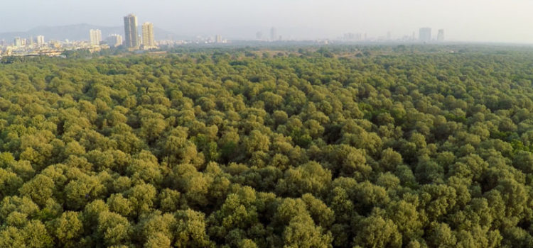 Jewels of Thane Creek Last year in 2015, I spent some significant amount of time shooting a documentary for Mangrove Cell, Maharashtra Forest Department to showcase the biodiversity of Thane Creek. Through this article, I […]