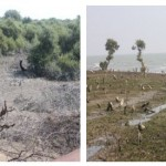 Mangroves destroyed at Mundra SEZ