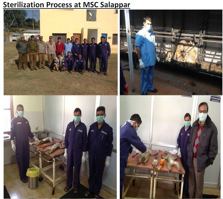 Sterlization Process at MSC Salappar