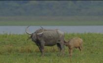 Wild India – Love in the Wild India is Wild. India is beautiful. I had read these lines during my childhood days and had always imagined being in our forests, quietly listening to the roaring […]