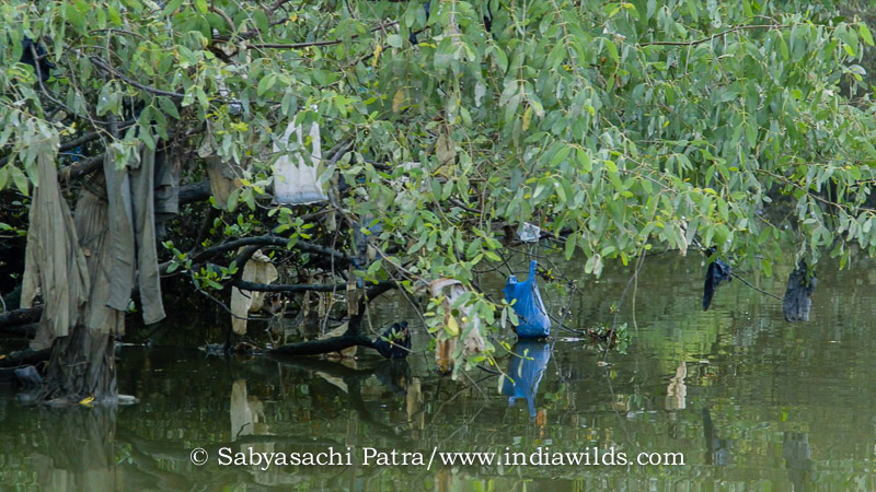 Plastics in Thane creek